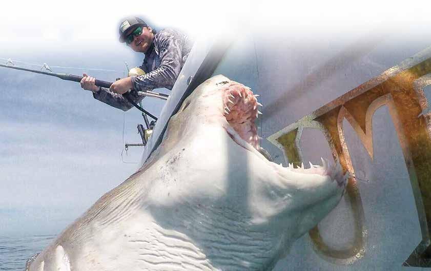 Page 44 of South Carolina's Great White Shark Whisperer