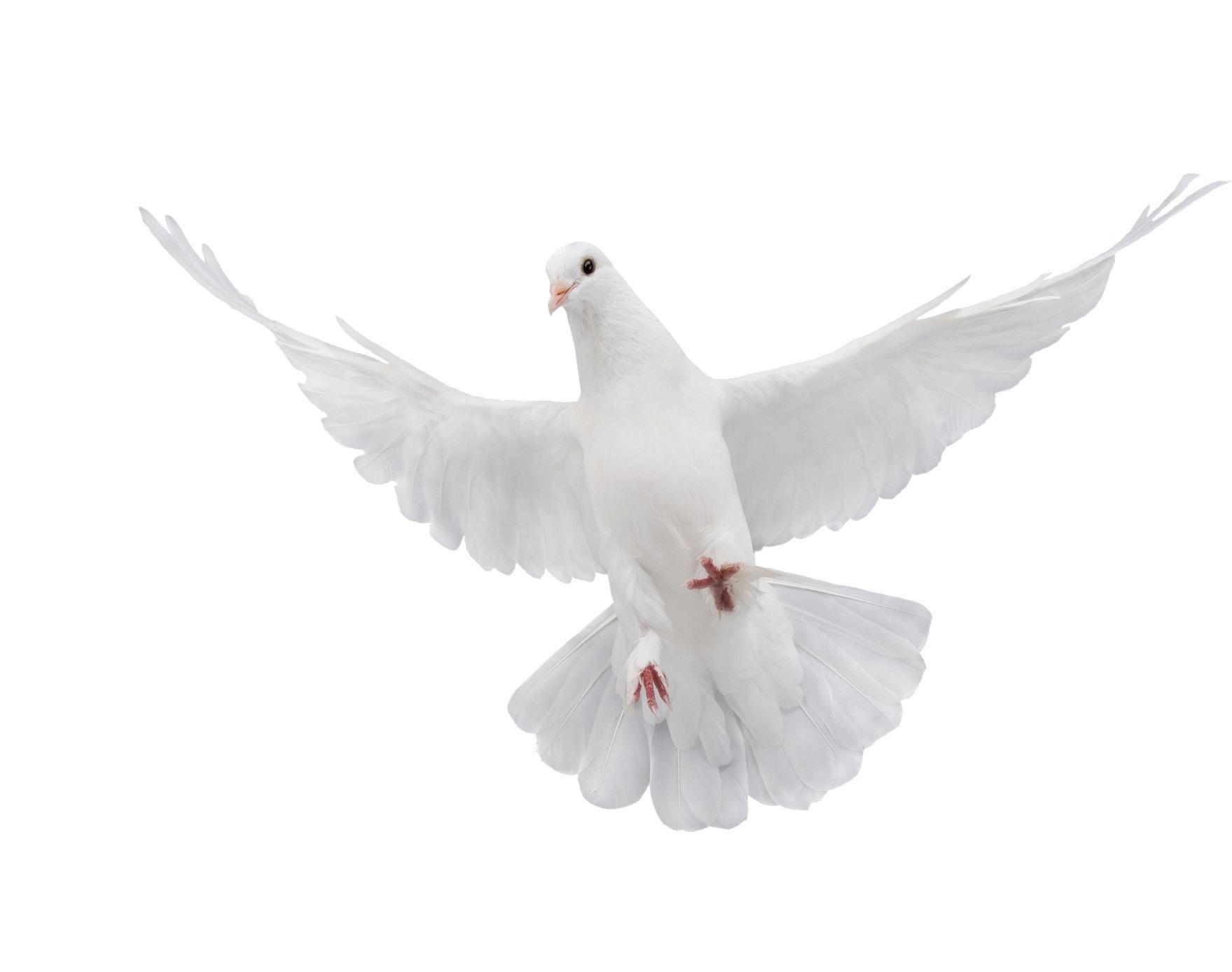 Page 5 of Holy Spirit Alive Conference November 12-13